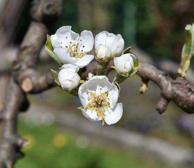 Osservazione delle fioriture tardive