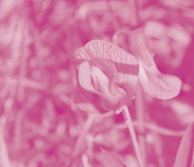 Giornate botaniche: le piante nelle stagioni