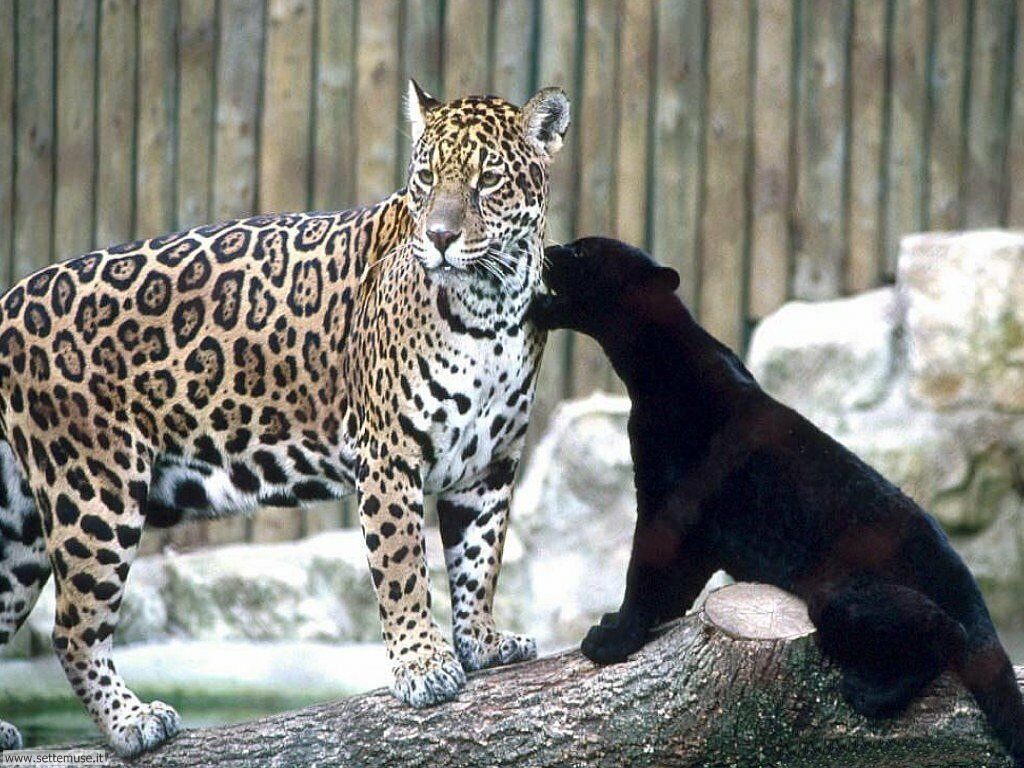 Leopard Print Cat Anime